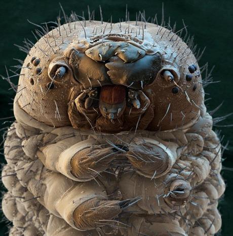 Larva Ngengat